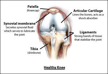 Healthy Knee Anatomy, Rockville, Maryland